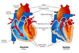 Corazón y la diabetes. En los últimos 15 años, el número de pacientes cardiacos con diabetes se duplicó haciendo hincapié en la estrecha relación entre esta enfermedad y la salud cardiovascular.